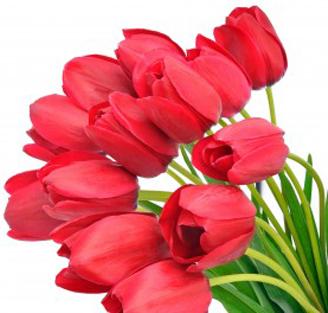 tulipany Życzenia od samorządowców na Dzień Kobiet