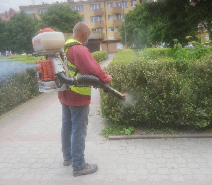 197319099 539495663722883 4751234929842312669 n Walka z ćmą bukszpanową azjatycką na dąbrowskich Plantach