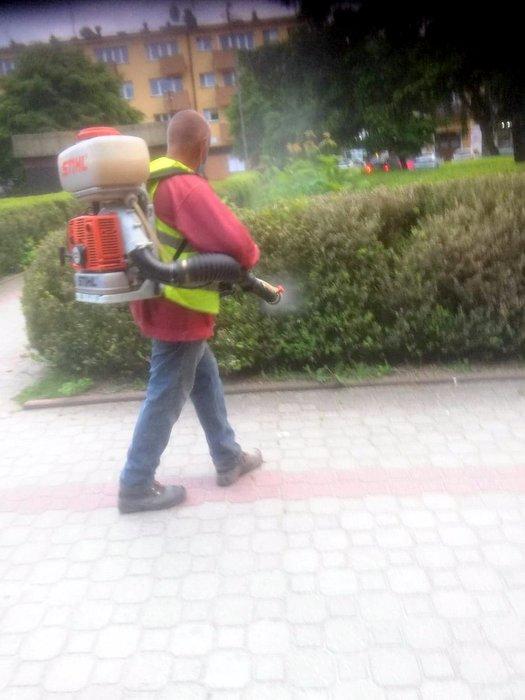 197903615 184748640121840 4332201778001862428 n Walka z ćmą bukszpanową azjatycką na dąbrowskich Plantach